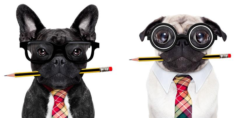 Two geeky dogs sitting side by side, a french bulldog holding a pencil in his mouth and a pug holding a pencil